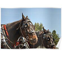 PSC Draft Horses Poster