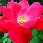 In My Mother's Garden by Wanda Raines