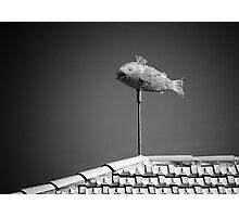 Flying fish. Photographic Print
