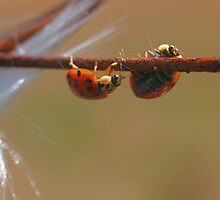 Balancing Ladybugs by SmilinEyes
