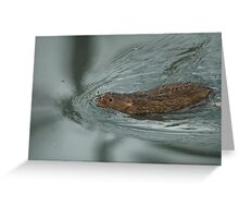 water vole paddling hard to keep his head above water Greeting Card