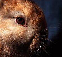 Baby Bunny I by WellgateFarm