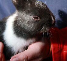Baby Bunny II by WellgateFarm