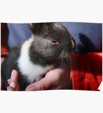 Baby Bunny II Poster