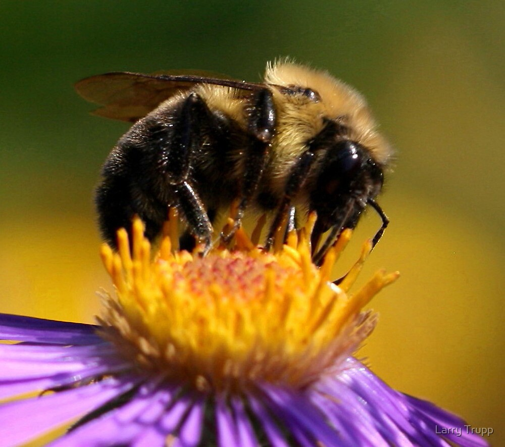 THE HONEY BEE QUEEN by Larry Trupp