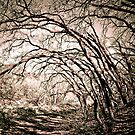 Crooked Woods by Kory Trapane