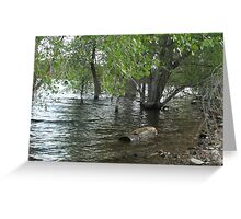 Floating Log- Willow Lake Greeting Card