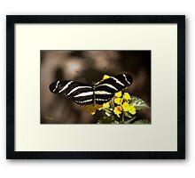 Zebra Longwing-2 Framed Print