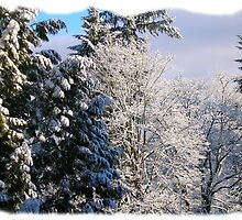 Winter Wonderland by KAVU