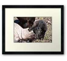 in those first 24 hrs Framed Print