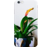 House plant with flower iPhone Case/Skin
