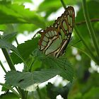 Green butterfly by Jamaboop