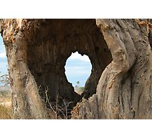 The eye of an African tree Photographic Print