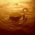 Sunset swan... by yaana