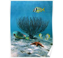 Seabed with colorful fish and sea rod coral Poster
