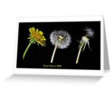 Dandelion Lifecycle Greeting Card