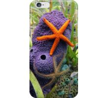 Comet starfish and brittle star on purple tube sponge iPhone Case/Skin