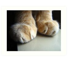 Cat Paws Art Print