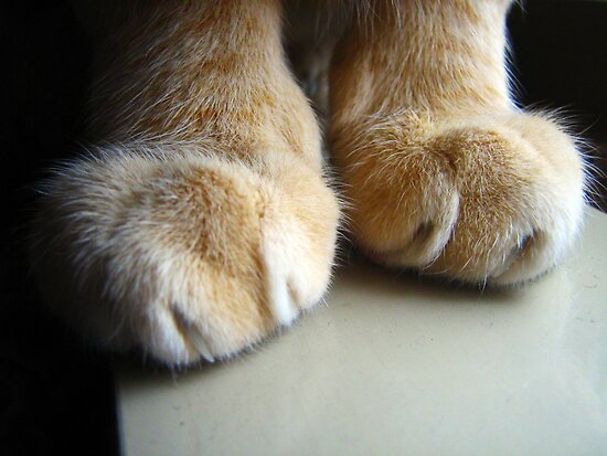 Cat Paws by Maria  Gonzalez