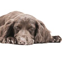 Let Sleeping Dogs Lie by Andrew Bret Wallis