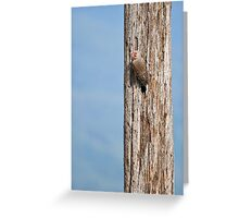 Flicker on a Pole Greeting Card