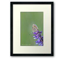 Silver-studded Blue, Plebejus argus Framed Print