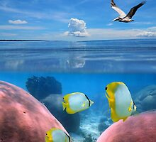 Tropical sea coral fish underwater and pelican flying  by Dam - www.seaphotoart.com