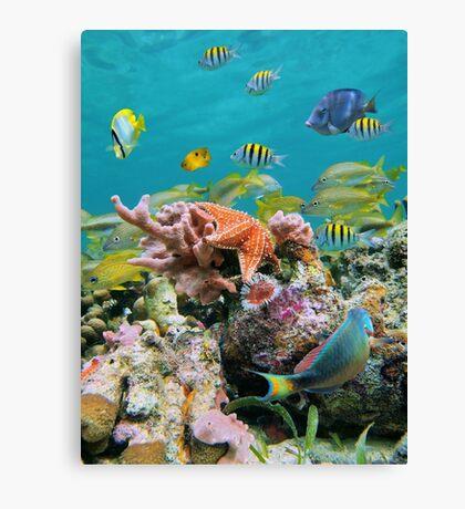 underwater sea life colors Canvas Print