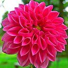 Pink Flower Macro by Tyler Stierhoff