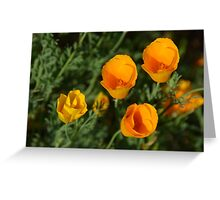 California Poppies - view from above Greeting Card