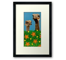 Peeping Ostriches  Framed Print