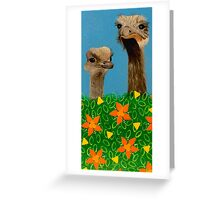 Peeping Ostriches  Greeting Card