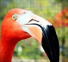 Flamingo Face by Cynthia48