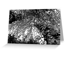 Angled Birch Tree - Black & White Greeting Card