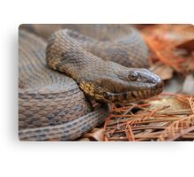Water Snake Canvas Print