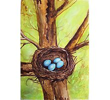 Robin's Nest Photographic Print