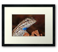 Fence Lizard Framed Print