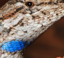 Fence Lizard Sticker