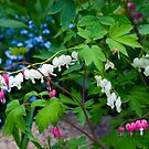Nature's Bleeding Hearts by Monica M. Scanlan
