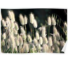 Wild flora 9011 Poster
