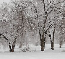 Dressed in White by rrushton