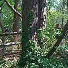 Backyard Woods by KarasuHachidori