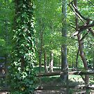 Backyard Woods 2.0 by KarasuHachidori