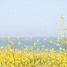 Yellow by Michael Lane