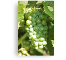 grapes in shadow Canvas Print