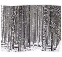 Snow on Trees Poster