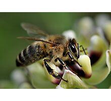 Year of the Honeybee  Photographic Print