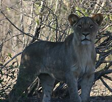 It will grow- Chobe National Park by Ouzopuppy