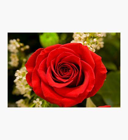 cinco de  mayo rose Photographic Print