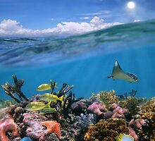 Split view with sky and coral reef underwater by Dam - www.seaphotoart.com